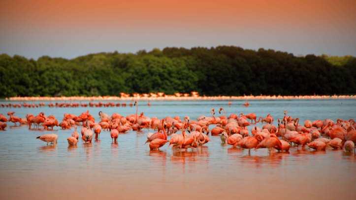 rio-de-los-flamingos-celestun-yucatan